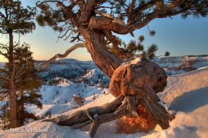 Bryce Sunrise Tree Stump